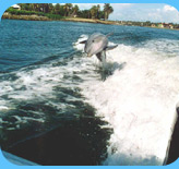 naples dolphin watching
