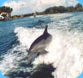 naples sunset cruise and dolphin watching
